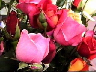 Flori cu dragoste...