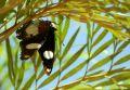 Fluture buclucas