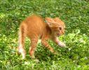 Un pisicesc la multi ani